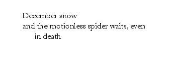 motionless-spider