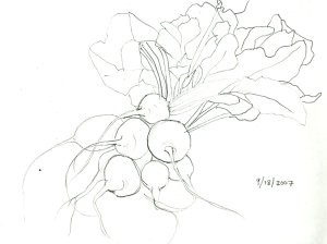 turnips-sketch