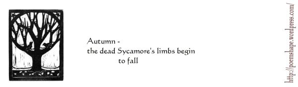 haiku- sycamore's limbs