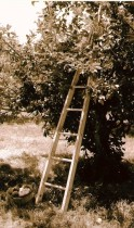 apple ladder
